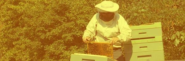 Kariera w pszczelarstwie